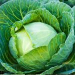 nurserylive-seeds-cabbage-f1-hybrid-vegetable-seeds-16969061007500_600x